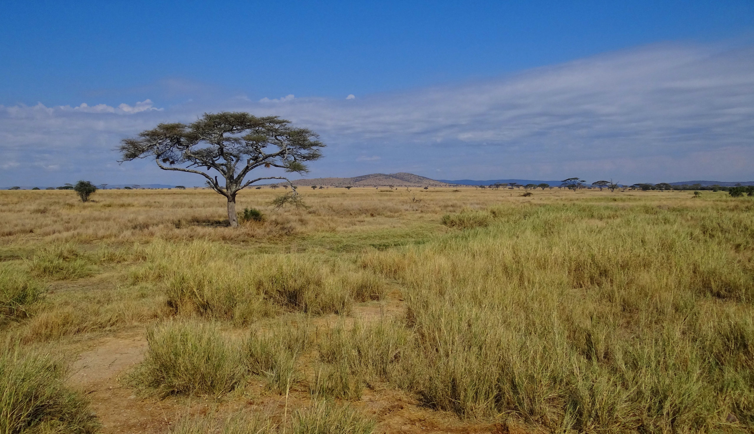 Serengeti Landscape 2012 scaled Top Safaris You Have To Tour
