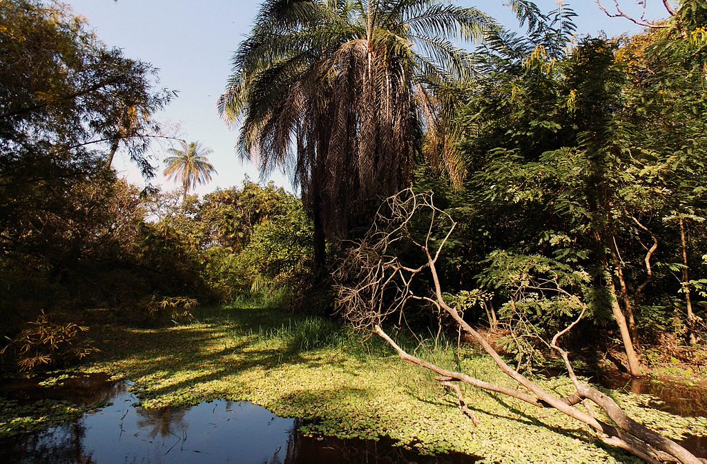 Abuko Nature Reserve Gambia December 2013 15 Must Visit Places In The Gambia!