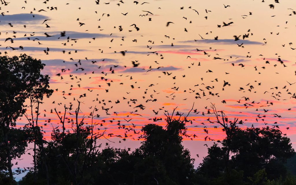 Bats travel EY5DTY 15 Reasons Why Zambia Is A Perfect African Vacation Spot