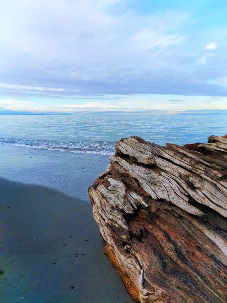 Dungeness Spit National Wildlife Refuge Sequim 7 5 Sandy Beaches To Visit In Kent This Summer