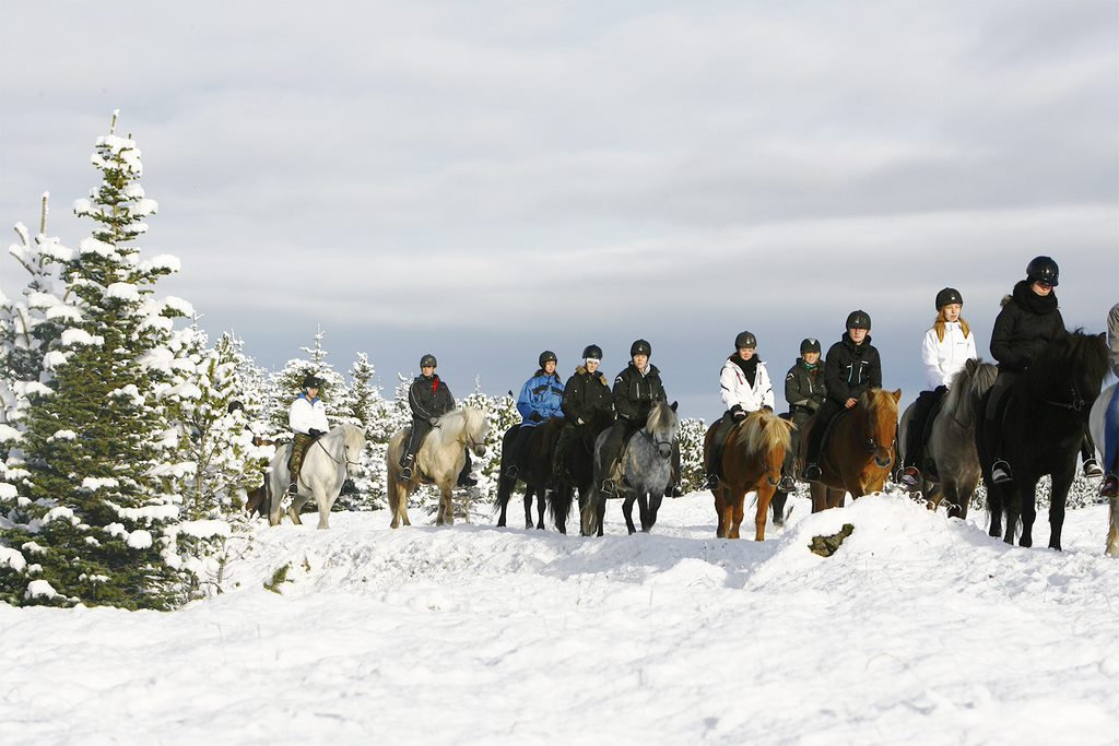 HORSERIDING TOUR 1 7 Incredibly Fun Things To Do In Iceland