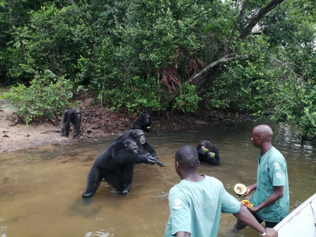 HSI 2 Liberia Hopes To Boost Tourism With New National Park In 2021.