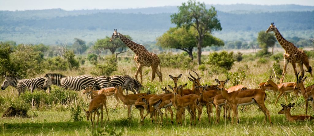 Mikumi park tanzania The Tanzanian Story: Why Dar Es Salaam Remains A Dominant Player In African Tourism