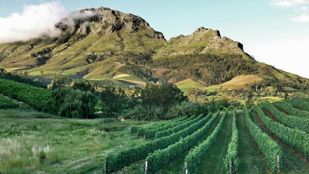 Stellenbosch vineyards Top 10 Must-Visit Places In South Africa.