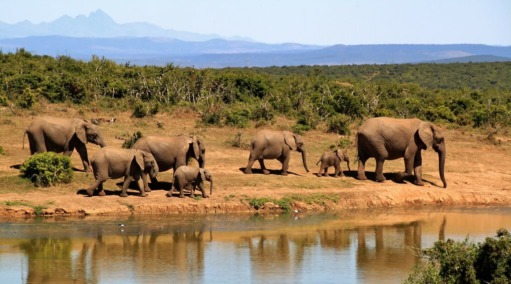elephants 279505 1920 15 Reasons Why Zambia Is A Perfect African Vacation Spot