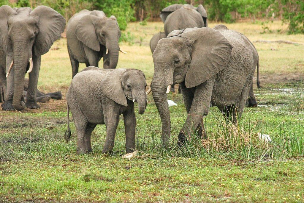 elephants 2923917 1280 Top Safaris You Have To Tour