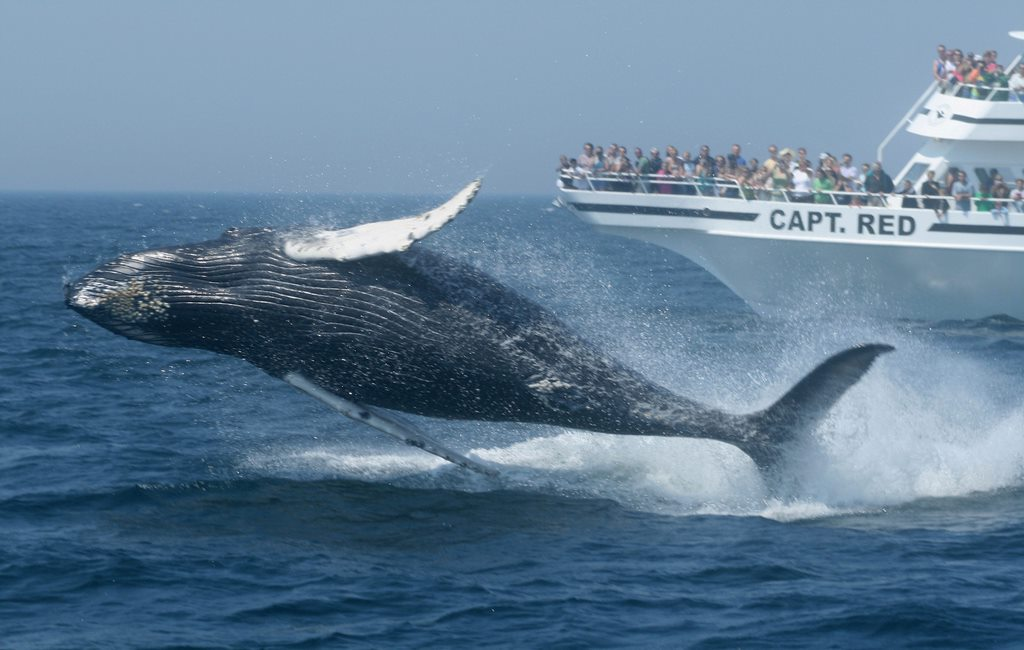 new england whale watching 1 7 Incredibly Fun Things To Do In Iceland