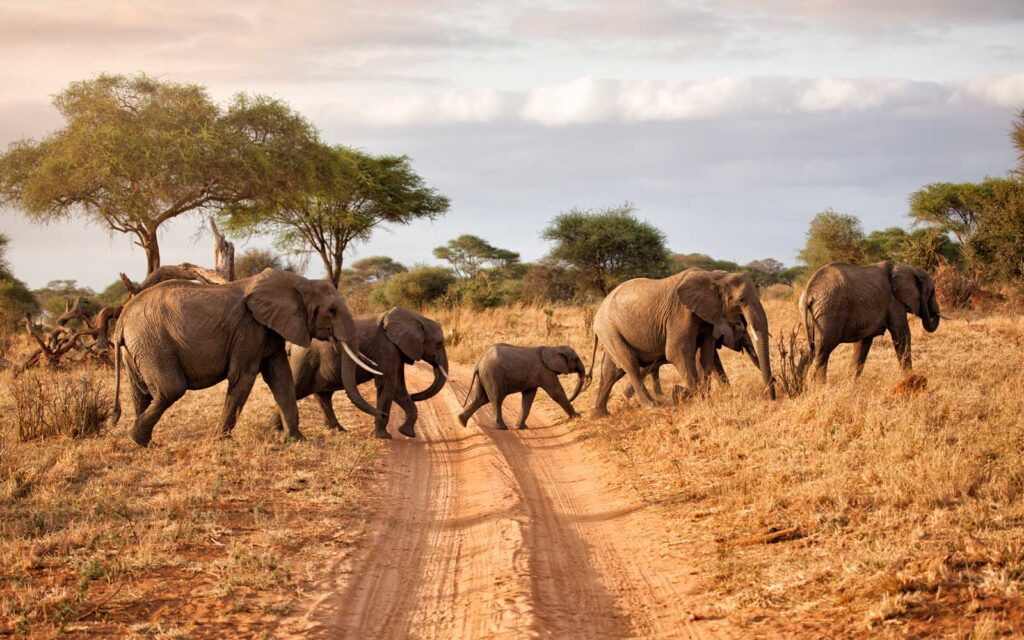 tanazia 2021 Best Travel Destinations With No Coronavirus Restrictions