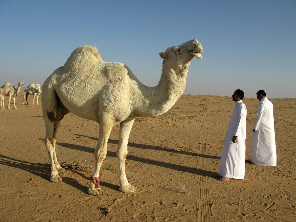 11 Reasons To Visit Saudi Arabia