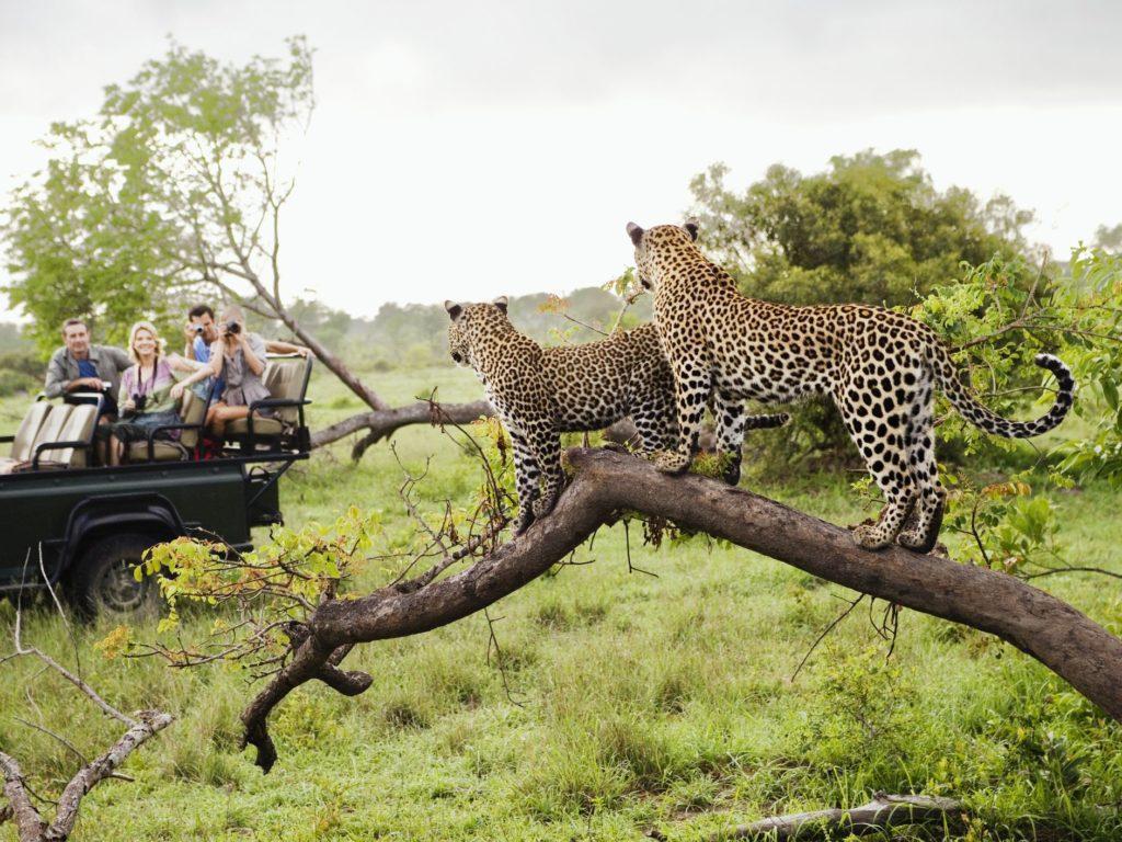 Top Safari Game Reserves in Africa