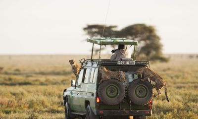 Top Safari Game Reserves in Africa
