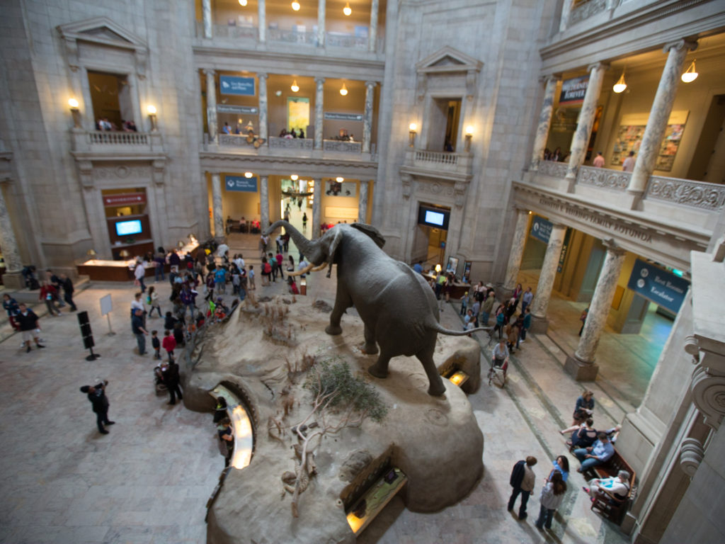 Smithsonian Elephant 13 Incredible Virtual Museums Online in 2021 And How to Earn from Them