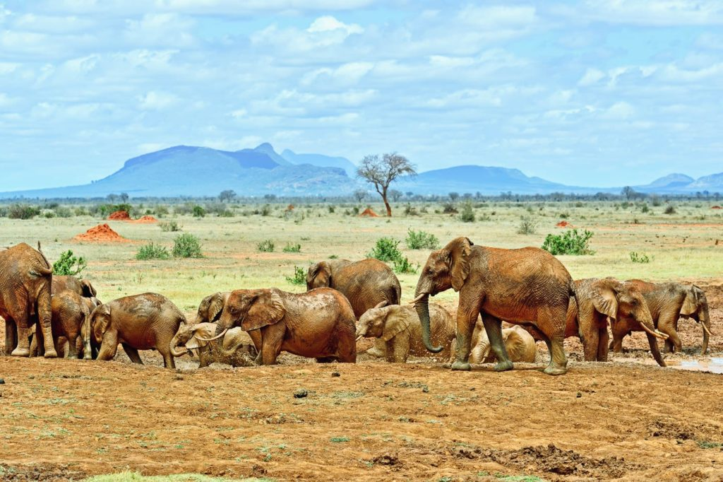 elephants tsavo park kenya timbuktu travel Top Safari Game Reserves in Africa – 2021 Rankings