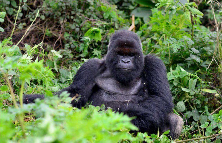 Rwanda kigali