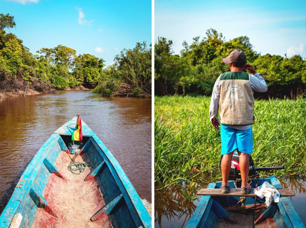 2021 Amazon Rainforest Travel Guide: Sights, Sounds and Delightful Cuisines